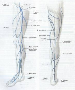 Trombosi di vene profonde delle estremità più basse attività fisica